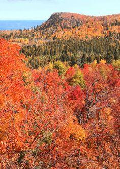 Fall in northern MN                             Duluth News Tribune   Duluth, Minnesota