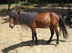 Skyrian or Skyros pony Island Horse, Pony Breeds, Greece, Cute Animals, Old Things, Miniature Horses, Ponies, Facebook, Greece Country