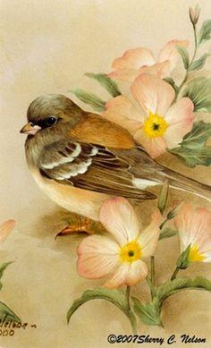 Watercolor Bird, Watercolor Animals, Watercolor Paintings, Pretty Birds, Beautiful Birds, Art Mignon, Bird Drawings, Bird Pictures, Vintage Birds