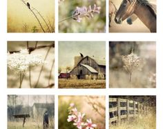 Country Rustic Photo Set of 9 barn horse wild flowers prairie swings fence home decor set brown pink bird queen annes lace cottage chic
