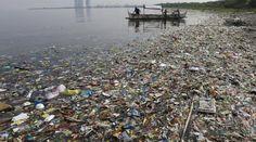 #Une larve dévoreuse de plastique, nouvel espoir pour l'environnement - Ouest-France: Ouest-France Une larve dévoreuse de plastique, nouvel…