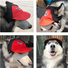 Funny Dogs, Funny Animals, Cute Animals, Cute Hats, Little Dogs, Dog Accessories, Dog Supplies, Small Dogs, Chihuahua