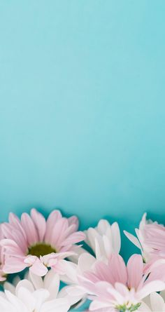 49 Ideas For Wallpaper Iphone Flowers Blue Wallpaper Pastel, Blue Wallpaper Iphone, Flower Background Wallpaper, Flower Backgrounds, Cellphone Wallpaper, Screen Wallpaper, Mobile Wallpaper, Wallpaper Backgrounds, White Wallpaper