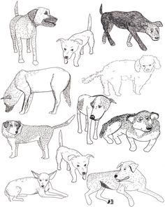 Sayulita Street Dogs Art Print