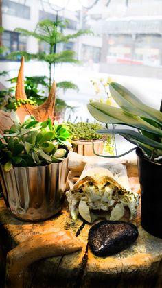 Display window styling @Kukkajahautauspalvelurosanna Kuopio Finland. Forest inspired styling for winter time.  #style #styling #interior #interiordesign #shop #flower #flowershop #finland #kuopio #nordic #nordicstyle #forest #inspired #inspiration #designer #interiordesigner