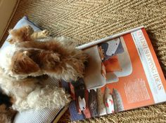 Bertie having a good read of Plum & Ashby's feature in Good Homes!