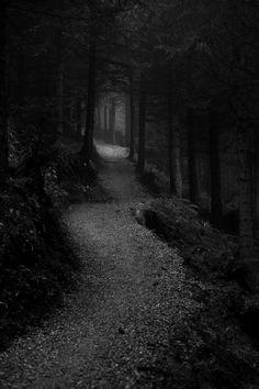 Fantasy landscape photography trees ideas for 2019 Dark Photography, Black And White Photography, Landscape Photography, Wedding Photography, Dark Landscape, Fantasy Landscape, Slytherin Aesthetic, Dark Pictures, Dark Paradise