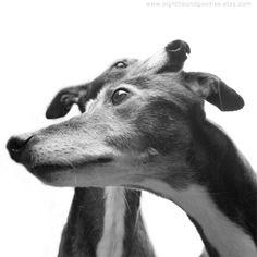 ~ Greyhounds ~