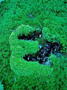 Letters in het bos voor wie het wil zien.