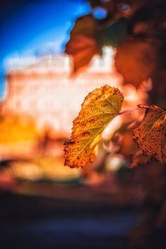 Autumn in Vienna, Austria by Patrycja Kasprzycka   www.kasprzycka.at   Instagram @p.kasprzycka   #fall #autumn #city #travel #leaves #bokeh #trees #vacation #sun #vienna #austria #photography #europe #shadow Vienna Austria, Autumn, Fall, Bokeh, Trees, Europe, Leaves, Graphic Design, Vacation