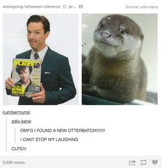 A new OtterBatch!!! I squealed so hard I think I invented a new sound