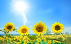 spring season brings lots of happiness and relief in the life after three months long winter season.Spring falls after the winter....