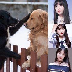 ChineseZodiac&KPOP // Dog // SeolA of CosmicGirls WJSN