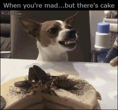 Dog licks cream off