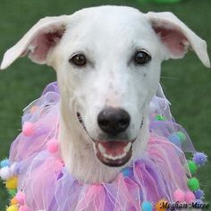 Princessa was adopted on 7/21/14!