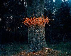 Flying Swarms of Everyday Objects by Thomas Jackson I love environmental art. Land Art, Art Environnemental, Art Et Nature, Instalation Art, Forest Art, Environmental Art, Outdoor Art, Pics Art, Tree Art