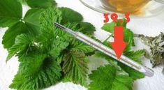 Kdo má na dvoře tyto listy, se nemusí bát zánětů, infekcí a horečky: Stačí je jen utrhnout a zalít vroucí vodou!   iRecept.cz Parsley, Celery, Herbs, Vegetables, Food, Hoods, Vegetable Recipes, Meals, Herb