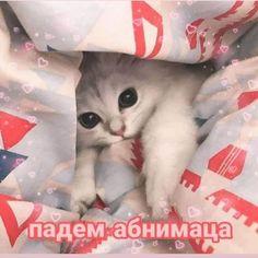 The Cat Grooming Brush - Sale! Cute Cat Memes, Cute Love Memes, Funny Memes, Russian Cat, Russian Memes, Animal Jokes, Funny Animals, Cute Animals, Hello Memes