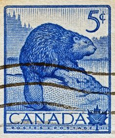 Canada Beaver No 336 1954 Canadian Coins, Canadian History, I Am Canadian, Going Postal, Thinking Day, Fauna, Mail Art, Stamp Collecting, Animals