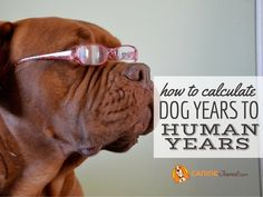 Don't rely on the outdated rule that 1 dog year equals 7 human years. Learn a better way to calculate dog years to human years. Nutrition Guide, Diet And Nutrition, Large Dogs, Small Dogs, Dna Methylation, Dna Research, Dog Dna, Dog Ages