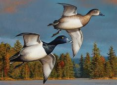 George+Lockwood's+Daily+Paintings:+Ring-necked+Ducks++9x12