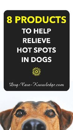 If you want to know how to treat hot spots on dogs, here's eight natural products and remedies you can try.
