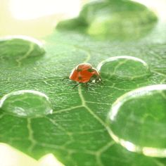 Cute Animated Ladybug Gifs at Best Animations