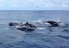 Que Pasa El Salvador: Delfines en playas Salvadoreñas