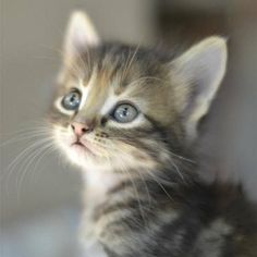 I think a big awwwww is needed for this little cutie!