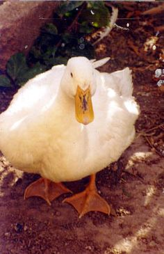 Crazy but sweet Longines, the Duck. She lived 12 years (1994-2006) and she was a real hoot.