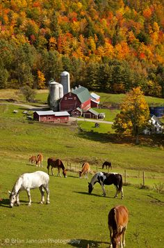 Horses Grazing In Autumn Art Print by Brian Jannsen – Horses – Natur Country Barns, Old Barns, Country Life, Country Living, Country Roads, Country Girl Truck, Amish Country, Photo Animaliere, Diy Photo