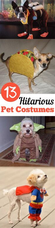 13 Hilarious Pet Costumes. Fall, fall decor ideas, Halloween, Halloween decor, autumn, DIY fall decor, DIY thanksgiving.