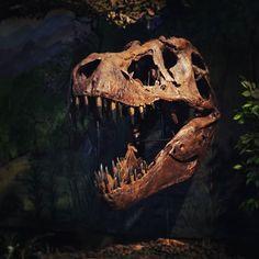 #rawr  #dinosaur #fossils  #trex #science #a6500 #sony