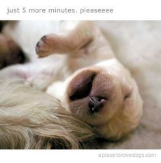 just 5 more minutes, pleaseeee....