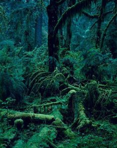 My soul lives in places like these, it flits about the forest and skips over the fallen, moss-covered logs. Drinking in the sunlight that streams through the leaves and listening to the wind whistle through the branches. Magical Forest, Deep Forest, Beautiful World, Beautiful Places, Nature Sauvage, Concours Photo, Wow Art, Belle Photo, Mother Nature