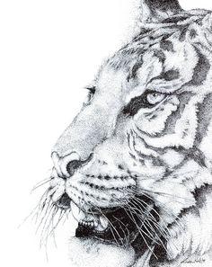 Tiger  by Kirsten Neil