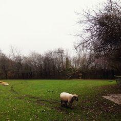 353/366 - Farm hustle. #london #farm #countryside #weekend #mobilephotography #project365