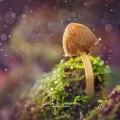 I love #autumn  Dandelion, Autumn, My Love, Instagram Posts, Flowers, Plants, Photography, Photograph, Fall Season