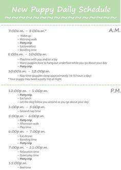 Puppy daily schedule