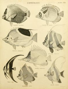 An introduction to the natural history of fishes : - Biodiversity Heritage Library