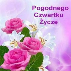 Good Morning, Rose, Flowers, Plants, Pictures, Polish, Buen Dia, Photos, Pink