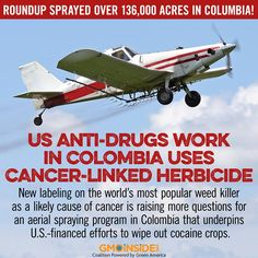 New labeling on the world's most popular weed killer as a likely cause of cancer is raising more questions for an aerial spraying program in Colombia that underpins U.S.-financed efforts to wipe out cocaine crops. More here: http://www.sfgate.com/news/medical/article/Colombia-drug-debate-revived-as-herbicide-deemed-6150909.php #cancer #stopmonsanto #roundup