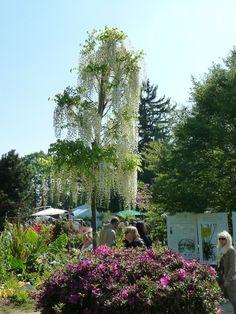 Quelques photos des Domaine de Courson - Journées des Plantes http://www.pariscotejardin.fr/2014/05/quelques-photos-des-journees-des-plantes-de-courson/