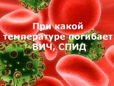 Устойчивость вируса ВИЧ, СПИДа во внешней среде. При какой температуре погибает ВИЧ, СПИД?