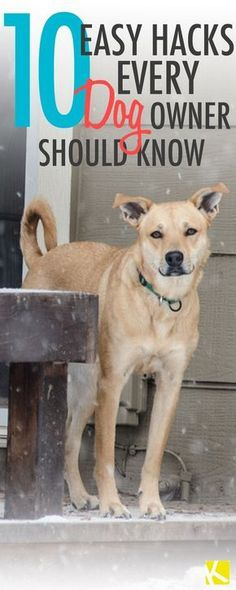 10 Brilliant Hacks Every Dog Owner Should Know