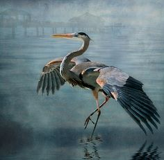 ♞ Artful Animals ♞ bird, dog, cat, fish, bunny and animal paintings - Blue Heron