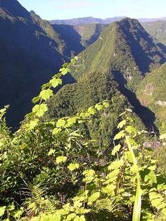 Piton Dorseuil, Réunion