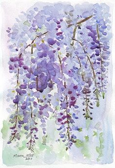 Wisteria...dramatic, intoxicating...here in a watercolor sketch from Sketching in Nature blogspot