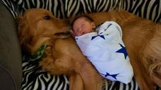 Dog saves baby girl abandoned in a dumpster - Just Mans Best Friend For Life
