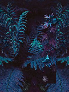 A fun image sharing community. Explore amazing art and photography and share your own visual inspiration! Julia Plus, L Wallpaper, Trendy Wallpaper, Flower Wallpaper, Glass Animals, Arte Floral, Vaporwave, Belle Photo, Ferns